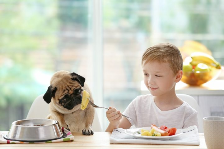 Healthy Homemade Pet Foods That Can Save You Money